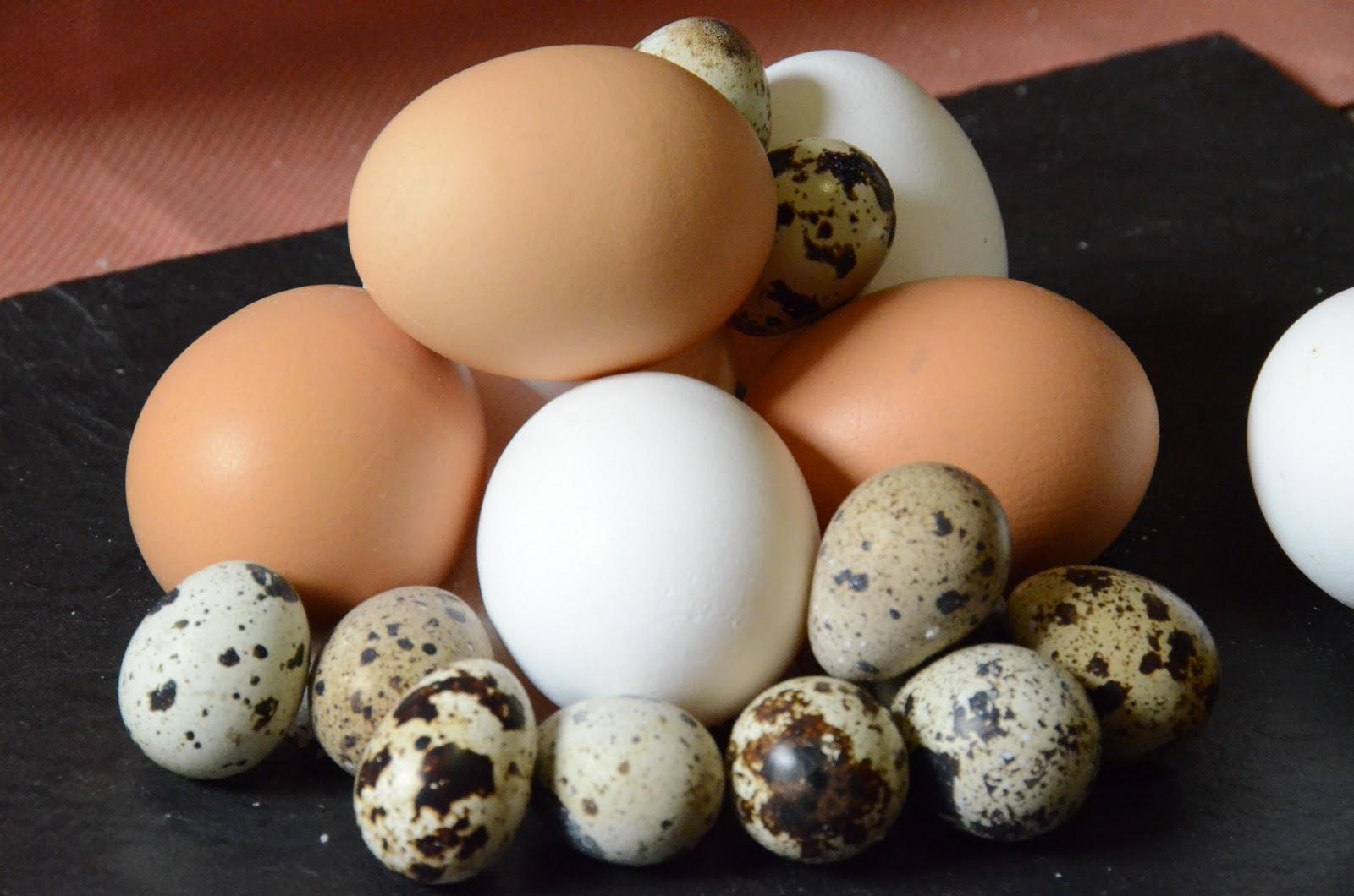 Sabías que el huevo no aumenta el colesterol sanguíneo?